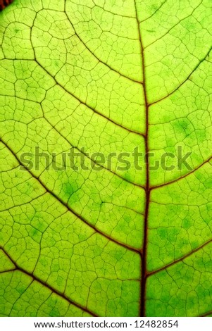 close up of a bright green leaf - stock photo