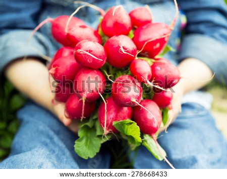 Close-up of a bunch of fresh radishes in the hands - stock photo