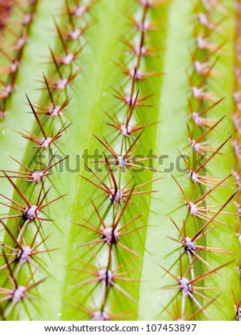 close up of a cactus - stock photo