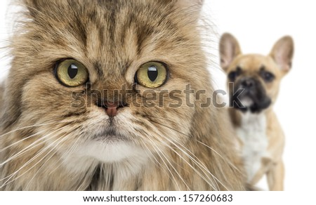 Close-up of a cat and dog hiding behind, isolated on white - stock photo