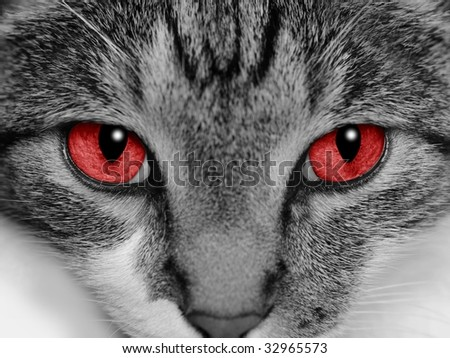 Close-up of a cat's face with selective coloring of her bright red eyes. - stock photo