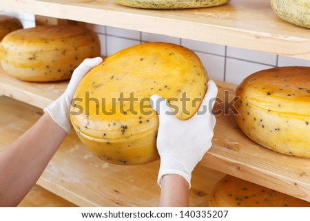 Close-up of a cheesemaker selecting mature cheeses from the shelves of the cheesemaking shop, wearing protective latex gloves - stock photo