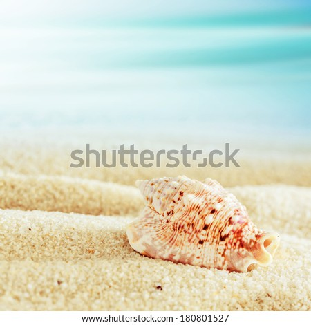Close up of a conch shell lying in the golden sand on a tropical beach with shallow dof and a sunny blue sky with copyspace, square format - stock photo