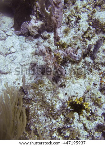 Close up of a coral reef at the bottom of the sea - stock photo