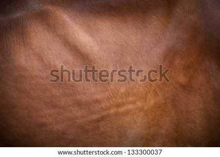 Close-up of a cow pattern. - stock photo
