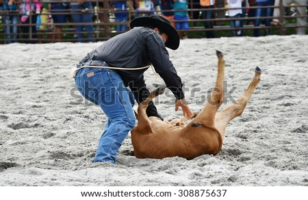 Close up of a cowboy bringing down a calf in a rodeo event - stock photo