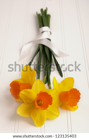 Close up of a Daffodil Bouquet wrapped in ribbon on White Wood Background for a spring season party or occasion with Copyspace. - stock photo