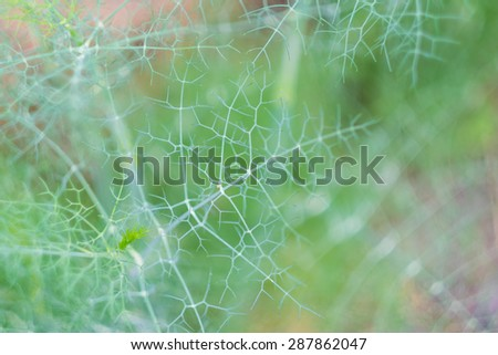 Close-up of a dill twig, shallow dof in the garden - stock photo