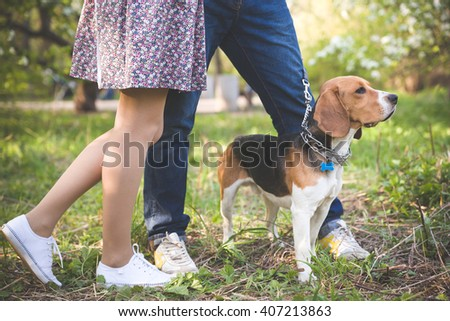 Close-up of  a dog. Woman and man with their nice dog in the park. summer walk with a dog. Beagle breed dog sitting in rack on a tight leash on green grass. - stock photo