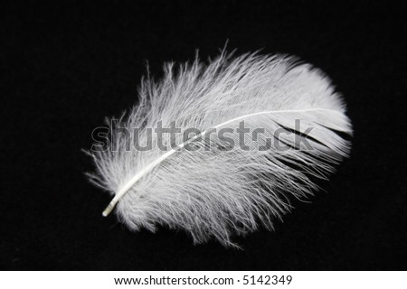 Close-up of a feather on a black background - stock photo
