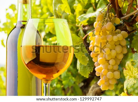 Close-up of a glass and bottle of white wine with grapes growing on the vineyard on background - stock photo