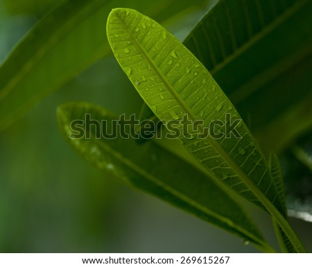 Close up of a green leaf with dew drop. An abstract nature background. blur - stock photo