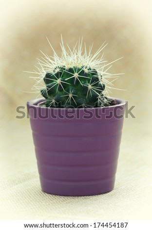 Close-up of a green prickly cactus in pot. - stock photo