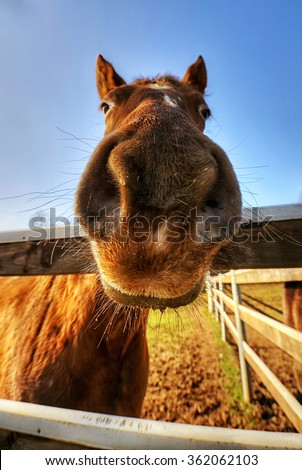 close-up of a horse made with a wide angle lens - stock photo