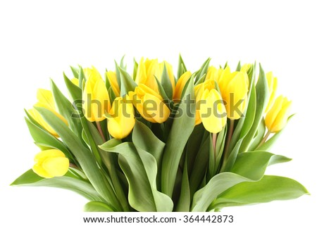Close-up of a lot of beautiful yellow tulips. Isolated on white background - stock photo