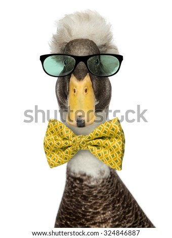 Close-up of a Male Crested Ducks wearing glasses and a bow tie isolated on white - stock photo