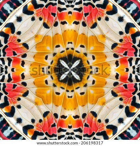 Close-up of a Monarch Butterfly Wing pattern - stock photo