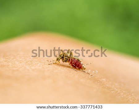 Close-up of a mosquito sucking blood. - stock photo