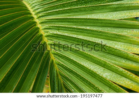 close up of a palm leaf - stock photo