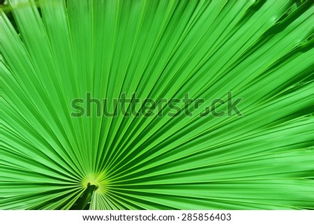 Close-up of a palm tree leaf - stock photo