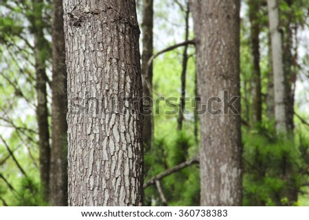 Close up of a pine tree trunk in a forest - stock photo
