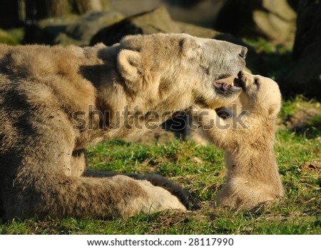 close-up of a polar bear and her cute cubs - stock photo