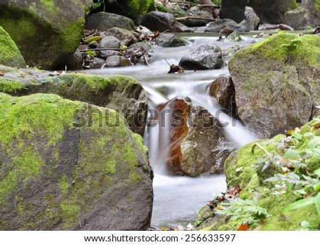 Close up of a rain forest creek showing water movement - stock photo