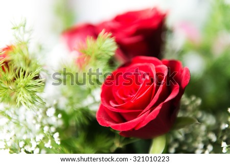 Close up of a red rose with fresh mist on its bloom  - stock photo