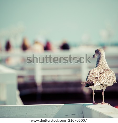 Close-up of a seagull in Sopot Pier, Gdansk with the baltic Sea in the background, Poland 2013. - stock photo