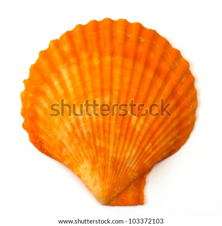 close up of a seashell on white background - stock photo