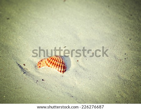 close up of a shell on the sand. Iso 100, processed for vintage tone effect. - stock photo