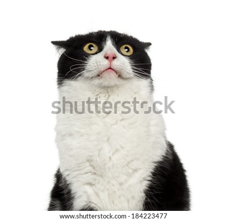 Close-up of a shy mixed-breed cat looking up - stock photo