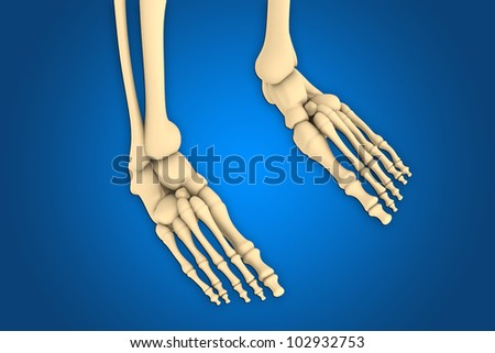 close up of a skeleton of ankle - stock photo