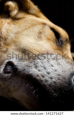 Close-up of a sleeping dog - stock photo