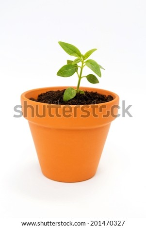 Close up of a small flower pot and green plant isolated on white background. - stock photo