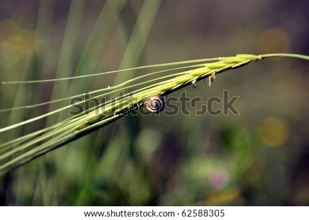 close up of a snail on grass - stock photo