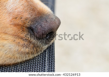 Close up of a spaniels nose with room for your text - stock photo