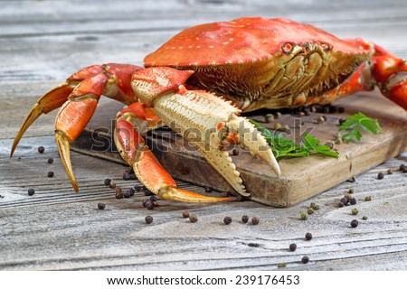 Close up of a steamed Dungeness crab on wooden server board with herb and spices ready to eat.  - stock photo