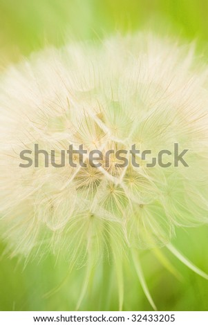 close-up of a thistle - stock photo