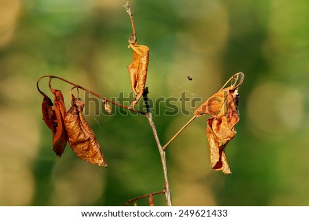 Close-up of a top part of withered young tree with a spider on the spider-web. - stock photo