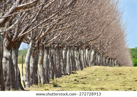 Close up of a tree fence in a pasture field in the country - stock photo