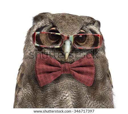 Close-up of a Verreaux's eagle-owl - Bubo lacteus (3 years old) wearing glasses and a bow tie in front of a white background - stock photo