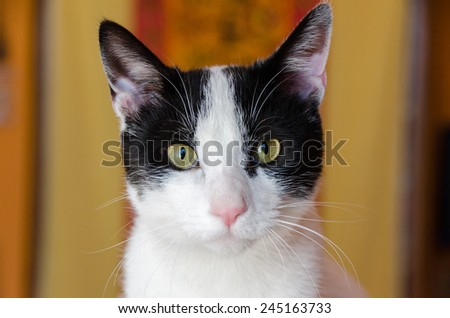 close-up of a white cat with black spots - stock photo