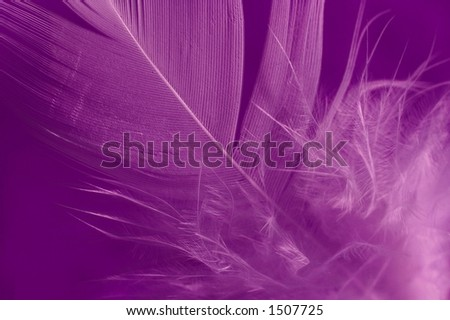 Close-up of a white feather on a purple background. Macro photograph: shallow depth of field! - stock photo