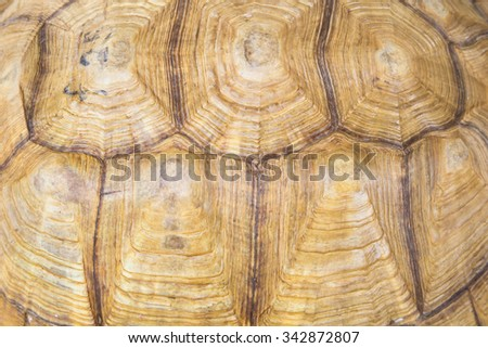 Close-up of African Spurred Tortoise shell - stock photo