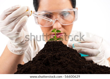 Close up of  agricultural scientist pouring  liquid on a plant  working in laboratory,selective focus on plant - stock photo