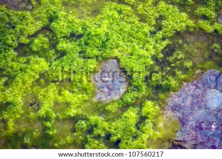 Close up of algae in shallow water - stock photo