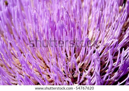 Close up of an artichoke flower - stock photo
