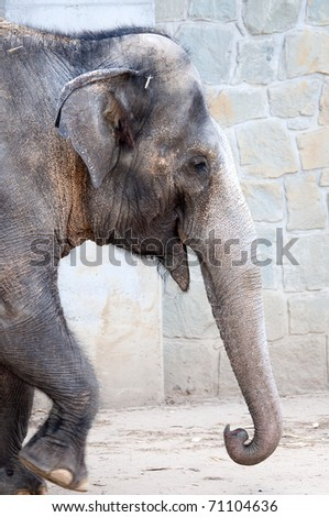 Close up of an elephant walking - stock photo