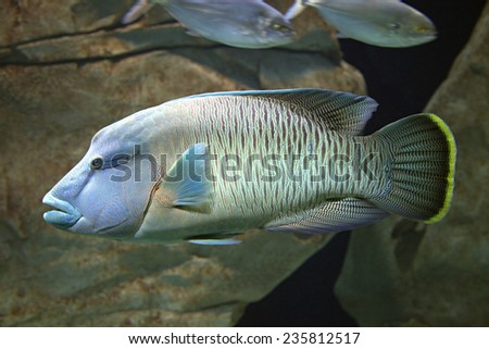 Close-up of an exotic fish swimming in the aquarium - stock photo